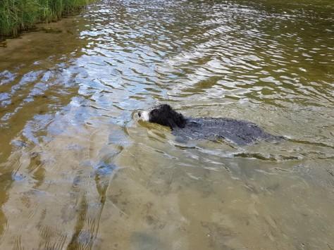 Luna schwimmt sehr gerne