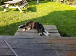 Gemütliches Hundeleben in den ferien