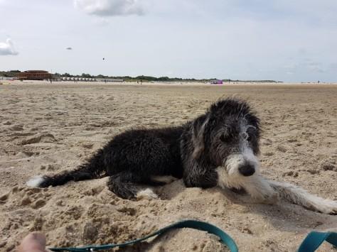 Luna liebt das Meer und den Sand