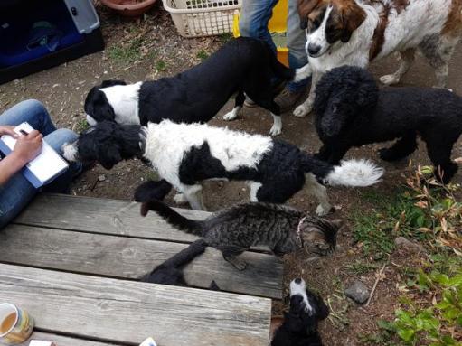 Hunde, Katzen, sogar Pferde und Pfauen gibt es auf dem Hof, auf dem Luna aufwächst